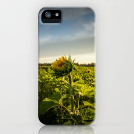 Field of Sunflowers iPhone Case