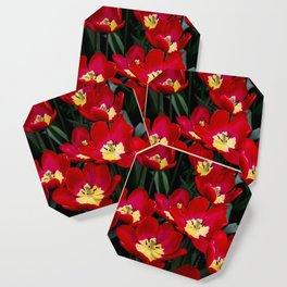 Closeup of Red Tulips with Yellow Centers in Amsterdam, Netherlands Coaster