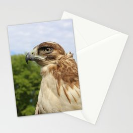 Red Tailed Hawk Stationery Cards