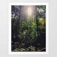 Woodsy Views Art Print