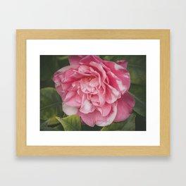 Pink Dream, Rose Photography, Rose Art, Nature Photography, Flower Print, Floral Print, Nature Print Framed Art Print