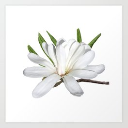 The Flower is the Star (Magnolia) Art Print