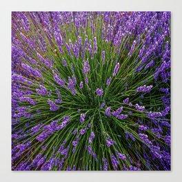 Lavender Field Of Dreams  Canvas Print