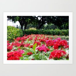 Flowers in Taipei Art Print