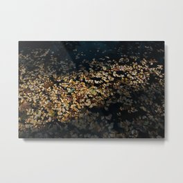 Ginko Leaves Metal Print