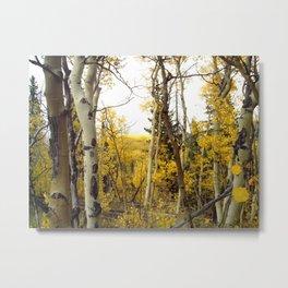 An Aspen Groves View Metal Print