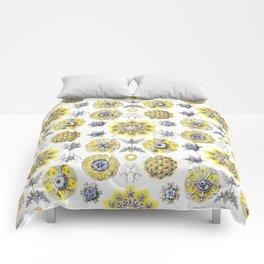 Ernst Haeckel - Polycyttaria Comforters