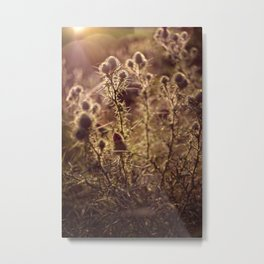Prickly beauty Metal Print