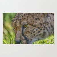 cheetah Area & Throw Rugs featuring Cheetah by Darren Wilkes Fine Art Images