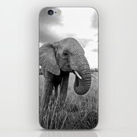 south africa iPhone & iPod Skins featuring African Elephant, South Africa by Shannon Wild