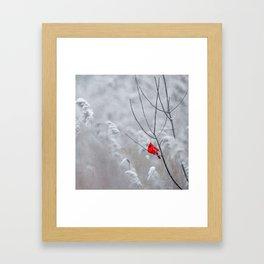Red Robin Winter Snow (Color) Framed Art Print