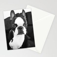 Lulo's evil look. Stationery Cards