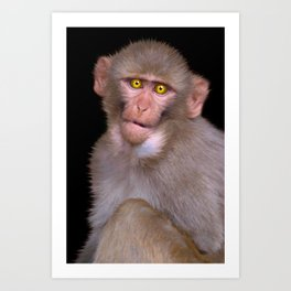 Young Rhesus Macaque Paintover Effect Art Print