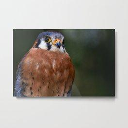 Raptor Birds - American Kestrel Metal Print
