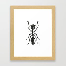 Ant 2 Framed Art Print