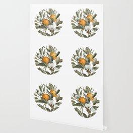 Orange Blossom Wallpaper
