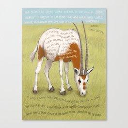 Scimitar Oryx Canvas Print