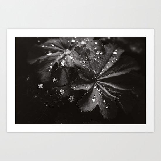 Secret Garden ~ No.10 Art Print