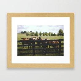 Yearlings Framed Art Print