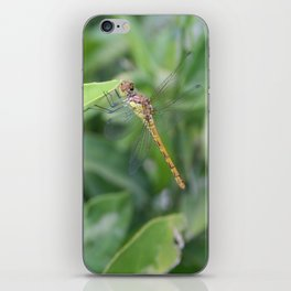Green and Brown Dragonfly Holding On To Oleander iPhone Skin