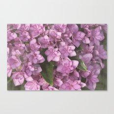 Double Bloom Hydrangea Canvas Print