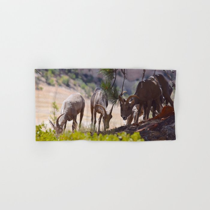 Desert Bighorn Sheep - Zion Hand & Bath Towel