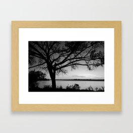 Tree at White Rock Lake Dallas B/W Framed Art Print