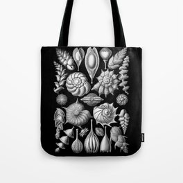Sea Shells (Thalamophora) by Ernst Haeckel Tote Bag