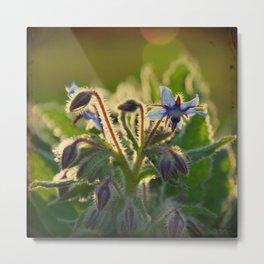 The Beauty of Weeds Metal Print