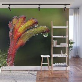Kangaroo Paw Flower Wall Mural