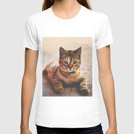 Cute Young Tabby Cat Kitten Kitty Pet T-shirt