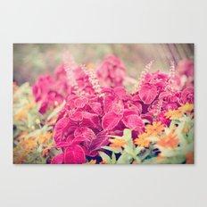 Garden Sunset  Canvas Print