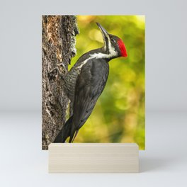 Female Pileated Woodpecker No. 2 Mini Art Print
