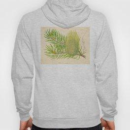 Abies bracteata Plant Vintage Botanical Evergreen Scientific Illustration Hoody