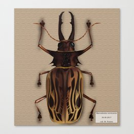 Macrodontia cervicornis (male) Canvas Print