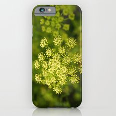 fennel in bloom iPhone 6s Slim Case