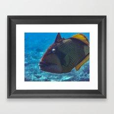 Titan triggerfish Framed Art Print