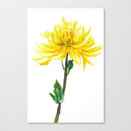 one yellow chrysanthemum Canvas Print