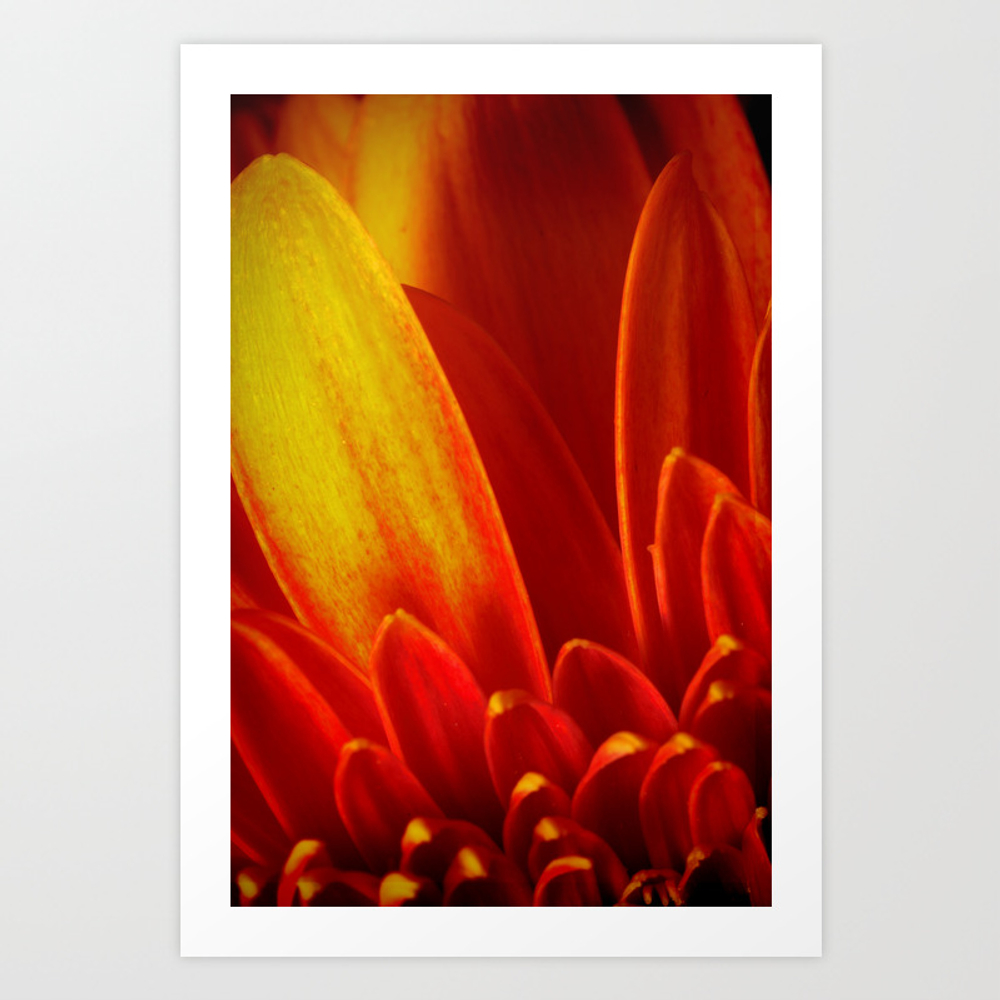 Gerbera In Love Poster by Fine2art PRN975452