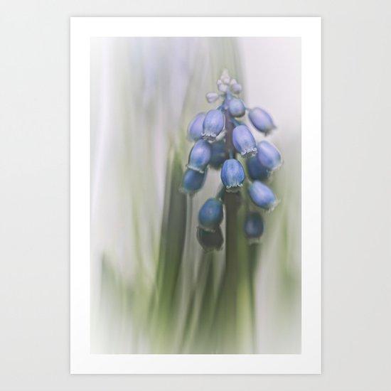 Grape Hyacinth VII Art Print