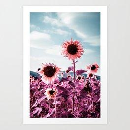 Pink Sunflowers Art Print