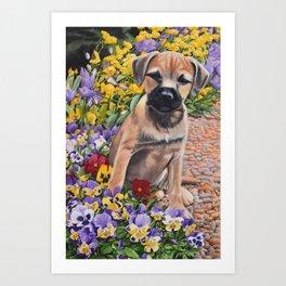 Border Terrier dog in the garden Art Print