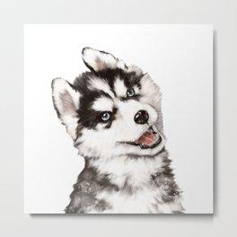 Baby Husky Metal Print