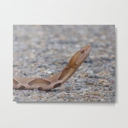 copperhead 2015 III Metal Print
