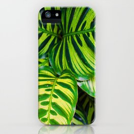 Leaf 1 iPhone Case