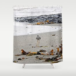 Greater Yellowlegs Strolling on the Beach Shower Curtain