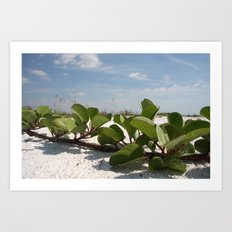 Fine Beach Vine  Art Print