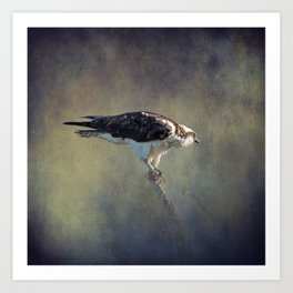 Osprey Raptor Art Print