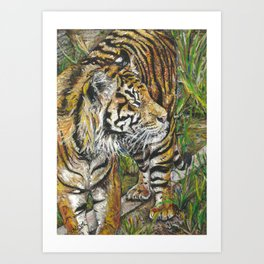 Jae Jae the Tiger Art Print