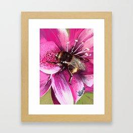 Bee on flower 13 Framed Art Print